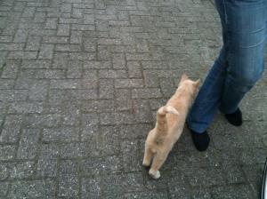A random German farm cat.